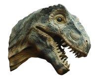 Tyrannosaurus rex . Isolated Royalty Free Stock Image