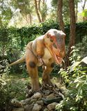 Tyrannosaurus rex-Late Cretaceous /150-65 million years ago. In Royalty Free Stock Photography