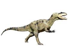 Tyrannosaurus rex odizolowywający na bielu Obraz Royalty Free