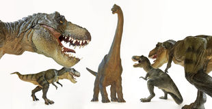 Tyrannosaurus Rex paczka Grozi brachiosaurusa Fotografia Stock