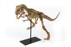 Tyrannosaurus rex skelet Royalty-vrije Stock Afbeeldingen