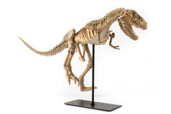 Tyrannosaurus rex skelet Royalty-vrije Stock Afbeelding