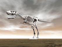 Tyrannosaurus rex skeleton - 3D render Royalty Free Stock Photo