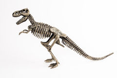 T-rex Stock Photos