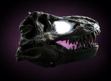 Tyrannosaurus Rex skull Royalty Free Stock Image