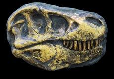 Tyrannosaurus rex skull Royalty Free Stock Photos