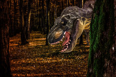 Tyrannosaurus Rex. Sneaking in forest Royalty Free Stock Photos
