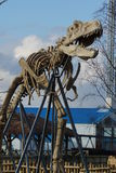 Tyrannosaurus Rex - T Rex Obraz Royalty Free