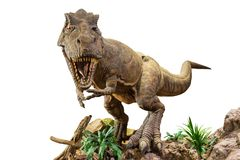 Free Tyrannosaurus Rex . T-rex Is Walking , Growling And Open Mouth On Rock . White Isolated Background . Embedded Clipping Paths Royalty Free Stock Photography - 163553267