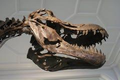 Tyrannosaurus Rex - T Rex Royalty Free Stock Photography
