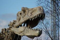 Tyrannosaurus Rex - T Rex Royalty Free Stock Images