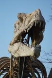 Tyrannosaurus Rex - T Rex Stock Photo