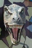 Tyrannosaurus Rex Ulaanbaatar Stock Photos