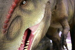Tyrannosaurus Rex. Was one of the largest land carnivores of all time royalty free stock photos