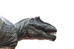 Tyrannosaurus rex. On white background Stock Images