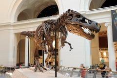 Tyrannosaurus Rex Zaskarża przy Śródpolnym Muzeum w Chicago Zdjęcia Stock