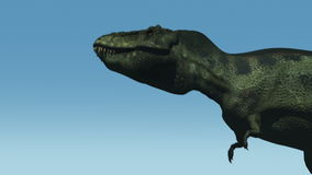 Tyrannosaurus Roars (Blue Sky). A T-Rex walks into the frame and roars stock video footage