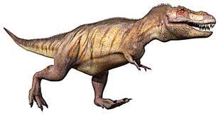 Tyrannosaurus running Stock Images