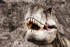 Tyrannosaurus showing his toothy mouth. Tyrannosaurus - prehistoric era dinosaur showing his toothy mouth Royalty Free Stock Photography