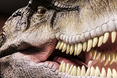 Tyrannosaurus showing his toothy mouth Royalty Free Stock Images