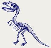 Tyrannosaurus skeleton Stock Image
