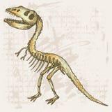 Tyrannosaurus skeleton. Grunge style. Vector stock illustration