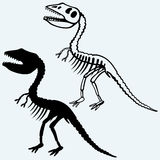 Tyrannosaurus skeleton. Isolated on blue background. Vector silhouettes Stock Images