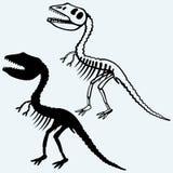 Tyrannosaurus skeleton Stock Images