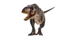 Tyrannosaurus T -t-rex, dinosaurus op witte achtergrond stock afbeelding