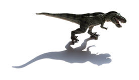 Tyrannosaurus toy with shadow. On a white background Royalty Free Stock Images