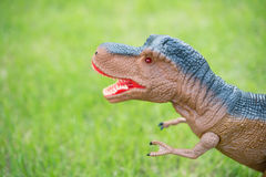 Tyrannosaurus toy standing. On grass Stock Image