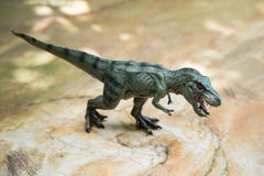 Tyrannosaurus toy standing. On rock Stock Photos