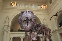 Tyrannosaurussen stock afbeelding