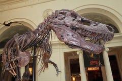 Tyrannosaurussen royalty-vrije stock foto's