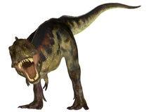 Tyrannosaurussen Royalty-vrije Stock Afbeeldingen
