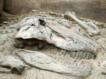 Tyrannosaurussen Rex Royalty-vrije Stock Foto's