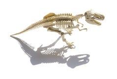 Tyrannosaurusskelet met schaduw op witte achtergrond Royalty-vrije Stock Foto's