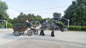 Tyraspol carriage. Carriage pulled by a beautiful gray horse, to take a ride in the park to the children, Tyraspol in the self-declared Republic of Transnistria royalty free stock photos