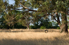 Tyre swing. A homemade tyre swing attached to tree in a field Royalty Free Stock Photos