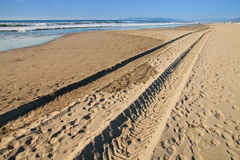 Tyre tracks on the beach Royalty Free Stock Photo