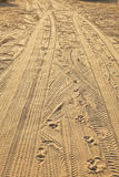 Tyre tracks and footprints at the beach Royalty Free Stock Photography
