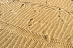 Tyre tracks and footprints Royalty Free Stock Photo