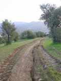 Tyre tracks in olive grove Stock Photos