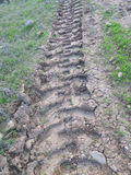 Tyre tracks in olive grove Royalty Free Stock Images