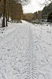tyre tracks on snow-covered forest road Stock Image