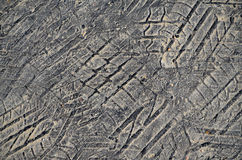 Tyre tread imprint in asphalt Stock Image