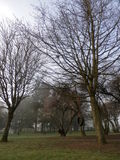 Tyre Tree swing in the park, foggy spring morning Stock Photo