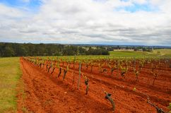 Tyrell wytwórnia win, Pokolbin, Australia fotografia royalty free