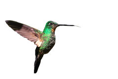 Tyrian Metaltail Stock Images