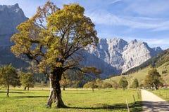 Tyrol, Ahornboden Stock Images